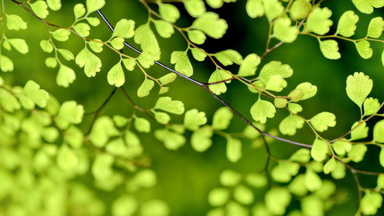 Green Spring Leaves | | Life Coaching in Calgary with Cheryl McDonald