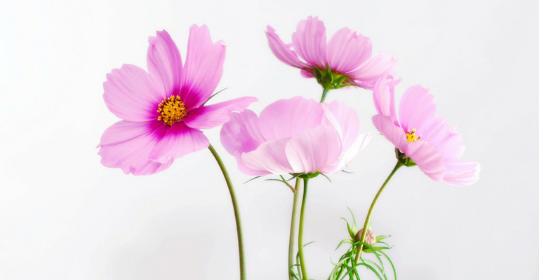 photo of pink flowers - needs vs wants - passion within coaching